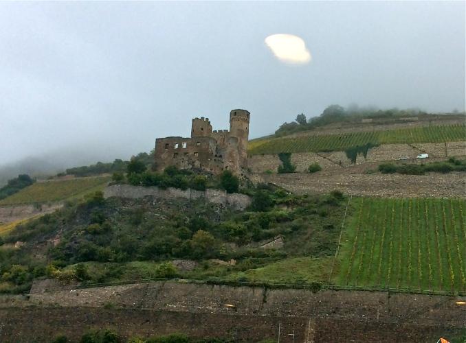 Picking grapes near Ehrenfels Castle along the Rhine, 10-18-14