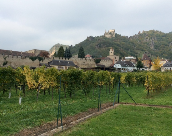 Lots of vineyards in the area, and many good Austrian wines are made here (10-25-14)